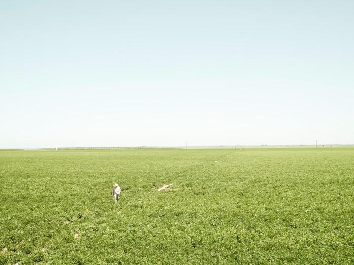 Soybean field in California
