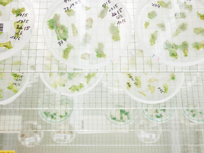 Cell cultures, German research institute