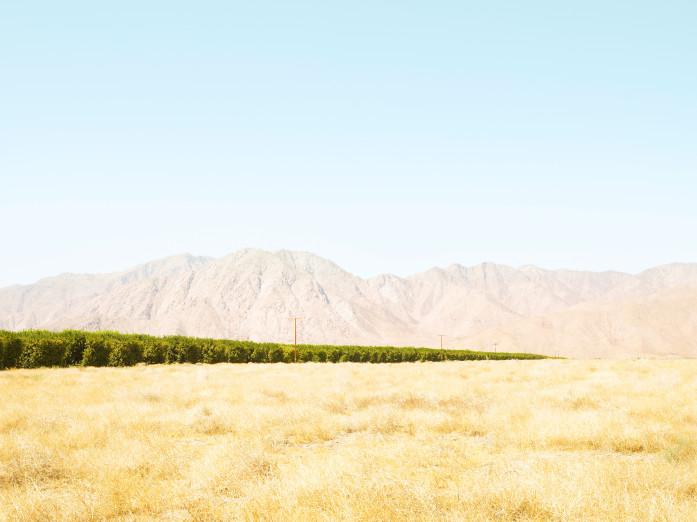 Grapefruit cultivation in Borrego Valley, USA