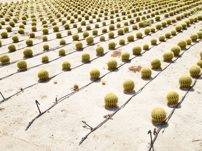 Cactus culture in Borrego Springs, USA