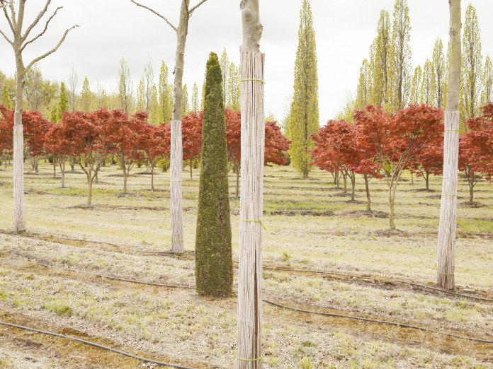Ornamental trees in northern Germany