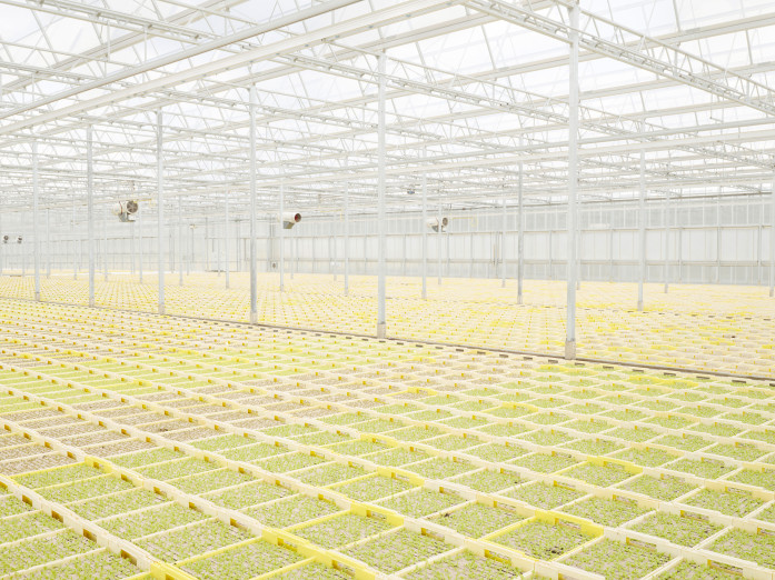 Cultivation of young lettuce plants in southern Germany