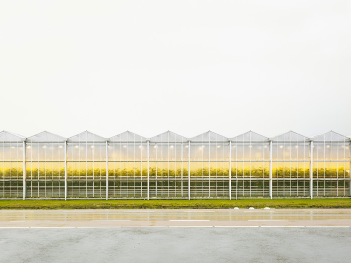 Greenhouse cultivation of tomatoes, the Netherlands