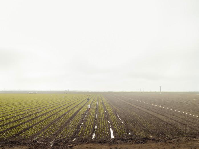 Agriculture, Monterey, California