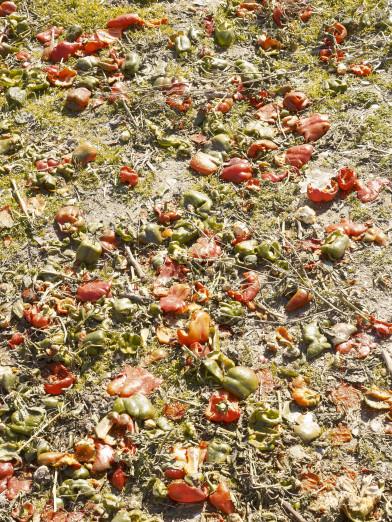 Remains after harvesting in La Alquería, Spain