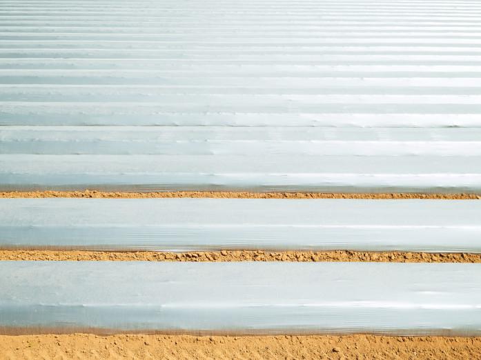 Strawberry plastic beds near Salinas, USA