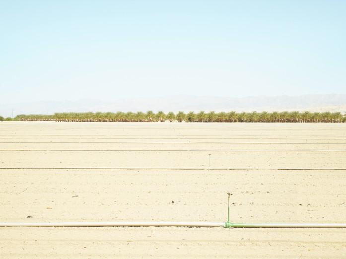 Dattelpalmenplantage nahe Palm Springs, USA