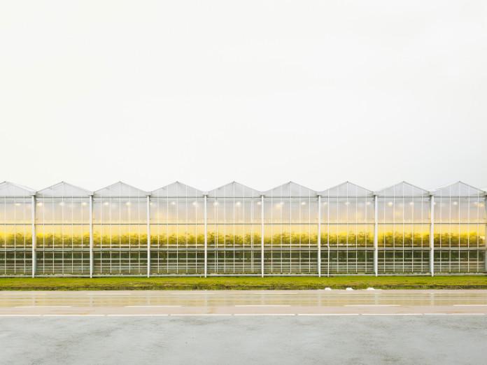 Gewächshauskultur mit Tomatenplanzen, Niederlande