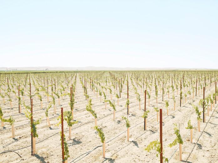 Weingut, Kalifornien