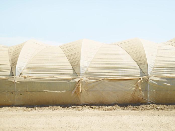 Himbeerplantage, USA